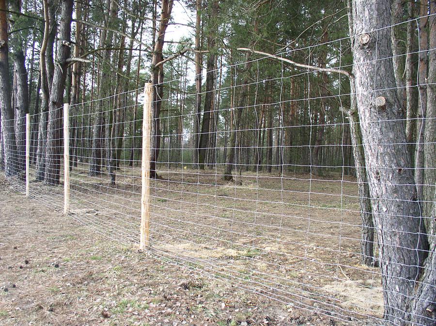 Ogrodzenie lesne